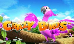 Play Crazy Birds